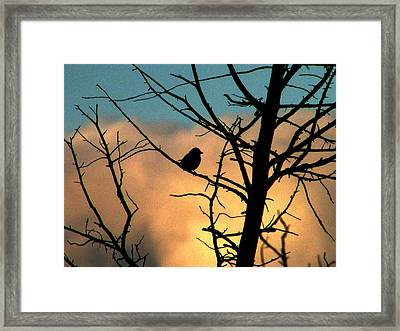 Feathered Silhouette Framed Print by Kimberly Mackowski