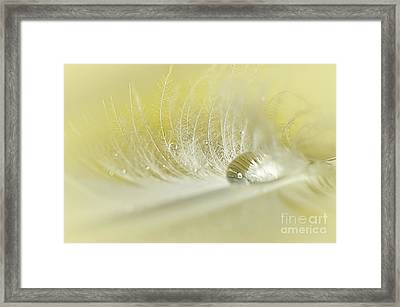 Feathered Softness Framed Print by Kaye Menner