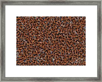 Feathers Framed Print by Aleksey Tugolukov