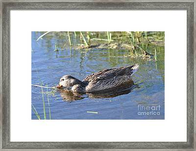 Feathers And Light Framed Print by Laurianna Taylor