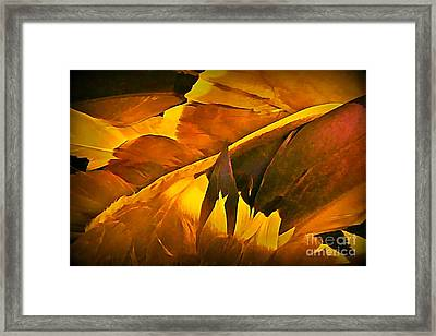 Feathers Framed Print by John Malone