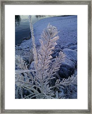 Feathers Framed Print by Susan Mumma