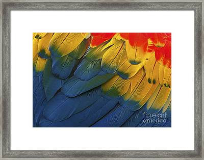 Feathery Details... Framed Print by Nina Stavlund