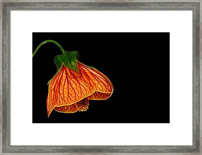 Features Of A Flower Framed Print