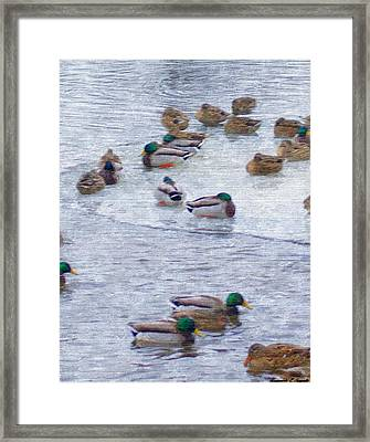 February  And Cold Ducks Framed Print by Rosemarie E Seppala