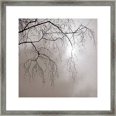 February Sun - Featured 3 Framed Print by Alexander Senin