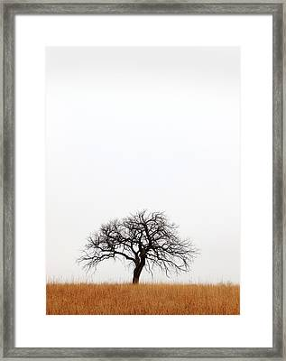 February Tree Framed Print by Christopher McKenzie