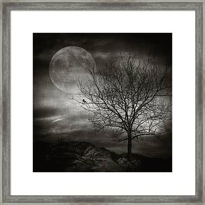 February Tree Framed Print by Taylan Apukovska