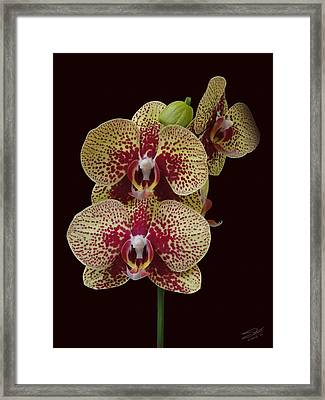 February's Orchid Framed Print by Schwartz