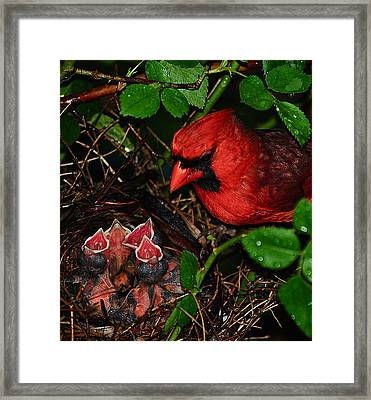 Feed Me Daddy Framed Print by Frozen in Time Fine Art Photography