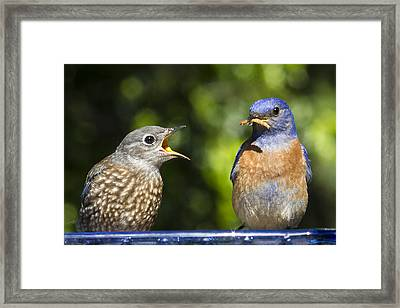 Feed Me Framed Print by Jean Noren