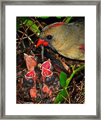 Feed Me Mommy Framed Print by Frozen in Time Fine Art Photography