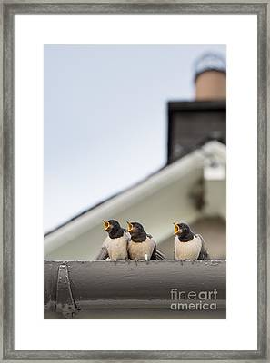 Feed Me  Framed Print by Tim Gainey