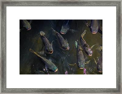 Feed Meeeeee First Framed Print by Lesley Brindley