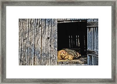 Framed Print featuring the photograph Feed Sack In Loft by Greg Jackson