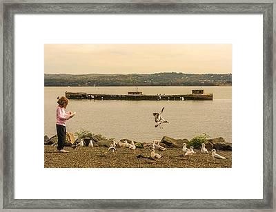 Feeding Birds Framed Print