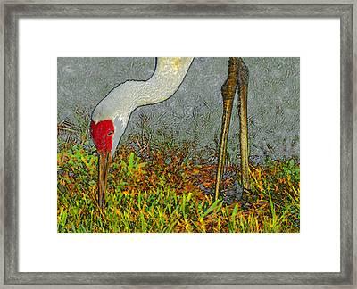 Feeding Crane Framed Print by David Lee Thompson