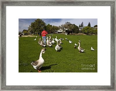 Feeding Ducks In A Park Framed Print by Jason O Watson
