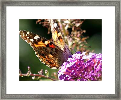 Feeding Framed Print by Eunice Miller