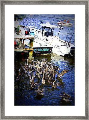Framed Print featuring the photograph Feeding Frenzy by Laurie Perry
