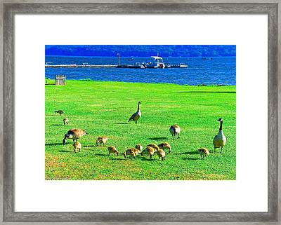 Feeding Goslings In Alabama Framed Print by Bob and Nadine Johnston