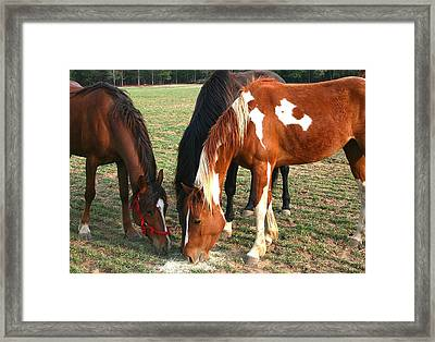 Feeding Horses Framed Print by Cathy Harper