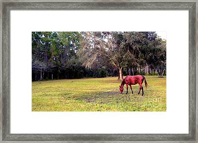 Feeding In The Pasture Framed Print
