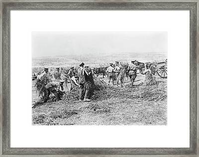 Feeding Military Horses Framed Print by Library Of Congress