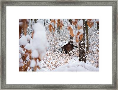 Feeding Site In The Forest In Winter  Framed Print by Matthias Hauser