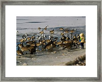 Feeding The Geese Framed Print by Matt Radcliffe