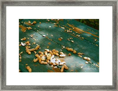 Feeding The Squirrels  Framed Print