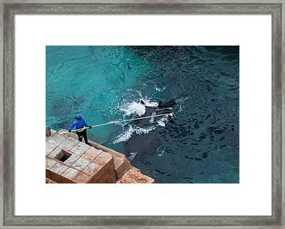 Feeding The Sting Rays Framed Print by Susan Stone