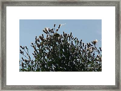 Feeding Time Framed Print by Deborah DeLaBarre
