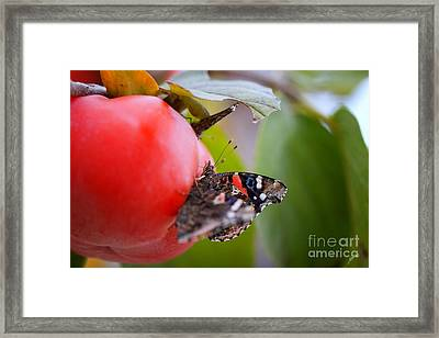 Framed Print featuring the photograph Feeding Time by Erika Weber