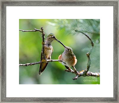 Feeding Time Framed Print by Mae Wertz