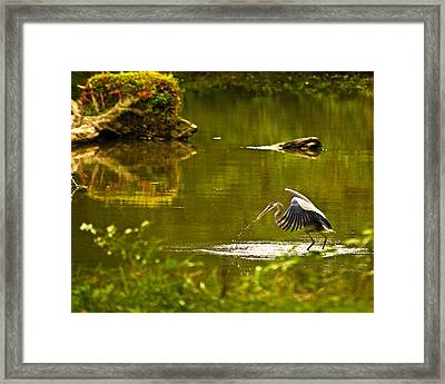 Feeding Time Wil 350 Framed Print