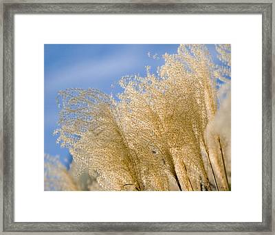 Feel The Breeze Framed Print
