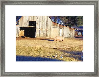 Feel The Sun Framed Print by Jan Amiss Photography
