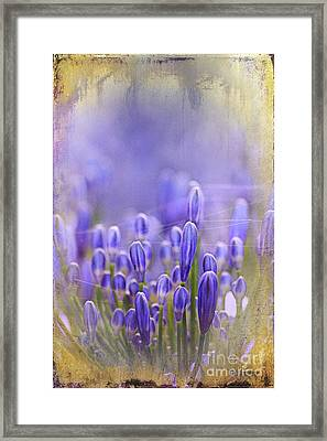 Framed Print featuring the photograph Feelin' Blue ... by Chris Armytage
