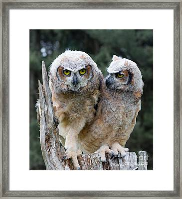 Feeling A Little Grumpy Are We? Framed Print by Barbara McMahon