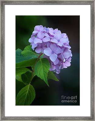 Framed Print featuring the photograph Feeling Blue by Kathi Mirto