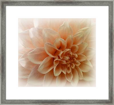 Feeling Peachy Framed Print by Faye Symons