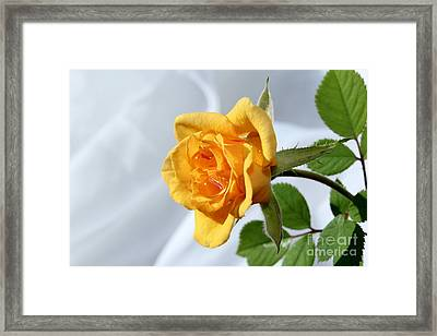 Feeling Peachy Framed Print