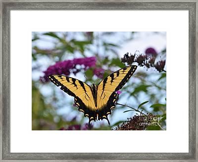 Feeling Pretty II Framed Print by Judy Wolinsky