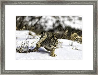 Feet Don't Fail Me Now Framed Print by Frank Pali