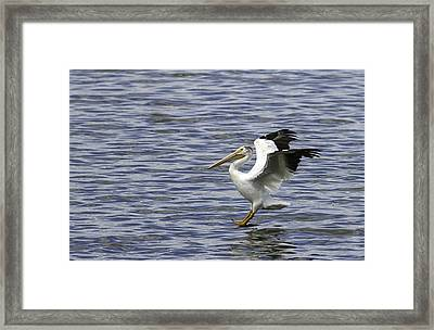 Feet First Framed Print by Thomas Young