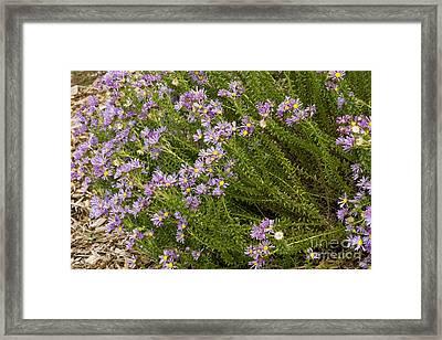 Felicia Dregei Framed Print by Bob Gibbons
