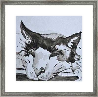 Feline Framed Print by Beverley Harper Tinsley