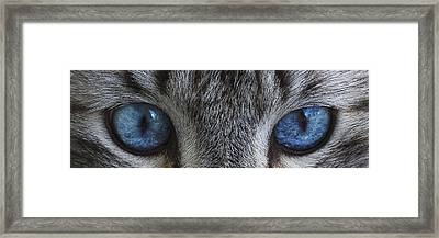 Feline Blue D4231 Framed Print by Wes and Dotty Weber