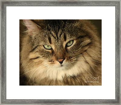 Feline Pleasures Framed Print by Inspired Nature Photography Fine Art Photography